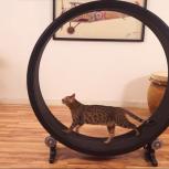 Беговое колесо-тренажер для кошек и небольших собак, Нижний Новгород