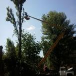 Профессиональный спил деревьев. Кронирование. Выкорчевывание., Нижний Новгород