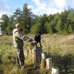 Дрессировка собак инструктором служебного собаководства, Нижний Новгород