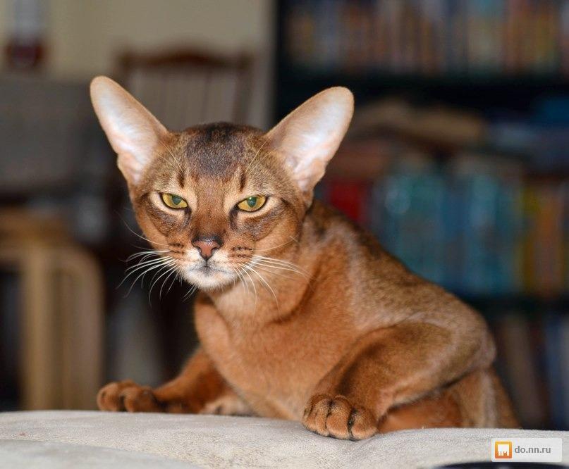 Найденные коты в нижнем новгороде