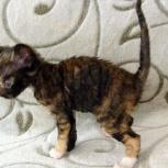 купить котёнка, Нижний Новгород