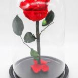 Роза 12см в колбе, Нижний Новгород