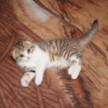 Котёнок, Нижний Новгород