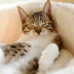 Передержка кошки, кота или котёнка, Нижний Новгород