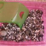 Аквариум для черепахи, Нижний Новгород