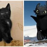 Черная кошечка – живая копия Беззубика, в добрые руки, Нижний Новгород