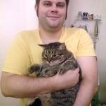 Квартирная передержка кошек на время отпуска, Нижний Новгород
