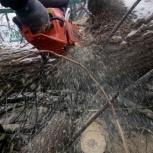 Спил деревьев, Нижний Новгород