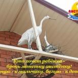 продается пансионат для летнего отдыха в Крыму г.Саки, Нижний Новгород