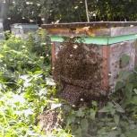Мёд и продукты пчеловодства, Нижний Новгород