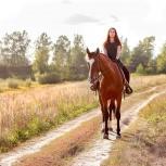 Для фотографов. Абонемент на фотосъёмку с лошадьми и пони, Нижний Новгород