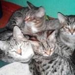 Коты и кошки  в добрые руки., Нижний Новгород