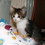 Очень милый котенок, Нижний Новгород