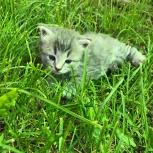 Отдам котят в добрые, Нижний Новгород