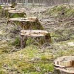 Удаление корней, Нижний Новгород