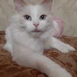Пропал белый котик на даче в богородском р-не, зименки (снт русь), Нижний Новгород