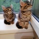 Котята от домашней кошки в добрые руки, Нижний Новгород