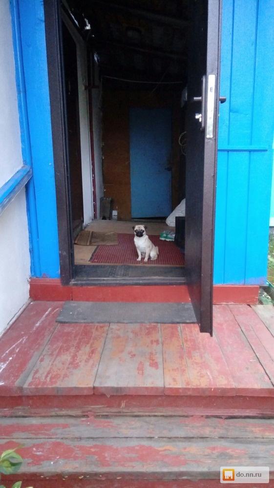 Купить щенка мопса в нижнем новгороде