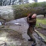 Спил вырубка удаление деревьев любой сложности, Нижний Новгород