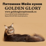 Котята Мейн кун из питомника Golden Glory, Нижний Новгород